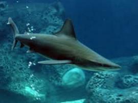 Das Hai-Bassin
