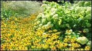 Arzneipflanzen im Botanischen Garten